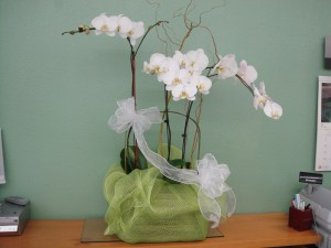 White Orchid Arrangement with Light Green Decor