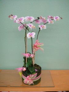 Lavender White Orchid with Spring Decorations and Ribbon