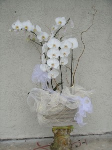 Beautiful White Orchids with Light Color Ribbon