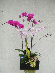 Large Purple Orchids with Small Light Lavender and White Orchids