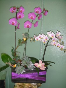 Spring Purple Accented Orchid Arrangement