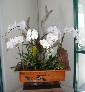 Beautiful White Orchids
