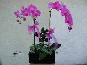 Purple Accented Orchid Arrangement