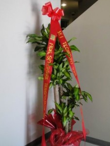 Green Plant with Accented Red Ribbons