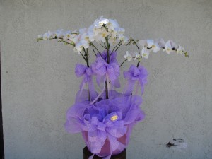 White Orchids Decorated with Lavender Ribbon
