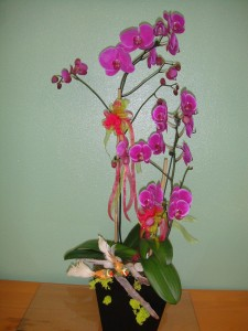 Purple Orchids with Spring Birds Decor