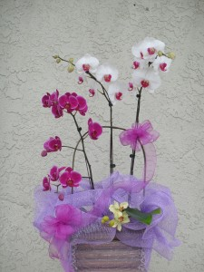 Purple and White Orchids with Spring Accented Decor