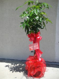 Large Green Plant with Accented Red Ribbons
