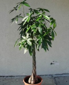 Large Green Plant